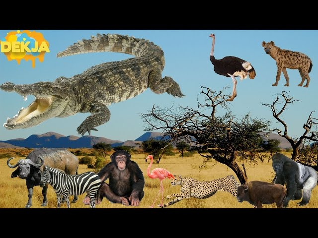 ??????????????????????? ??????????????????????????????? ??????????? - Wild Animals For Kid