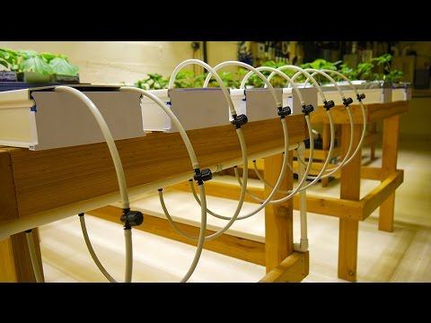 Part 3 Nft Tables Basement Hydroponic Led Garden Tour
