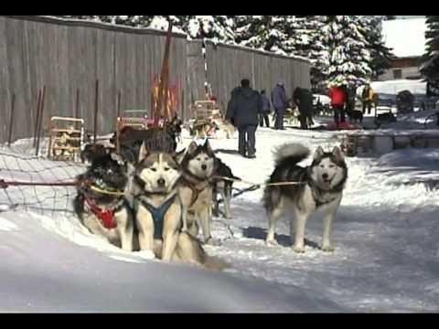 Dog sleddind tremblant - traineau a chien tremblant - Expedition Wolf - Laurentide
