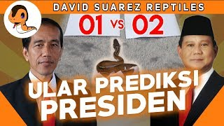 Download Video ULAR MEMPREDIKSI MASA DEPAN NEGARA INDONESIA   DavidSuarezReptiles MP3 3GP MP4