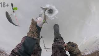 Рыбалка в Астрахани  Бешеный клёв судака