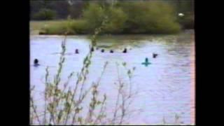 Newfoundland Dog Multi Water Rescue