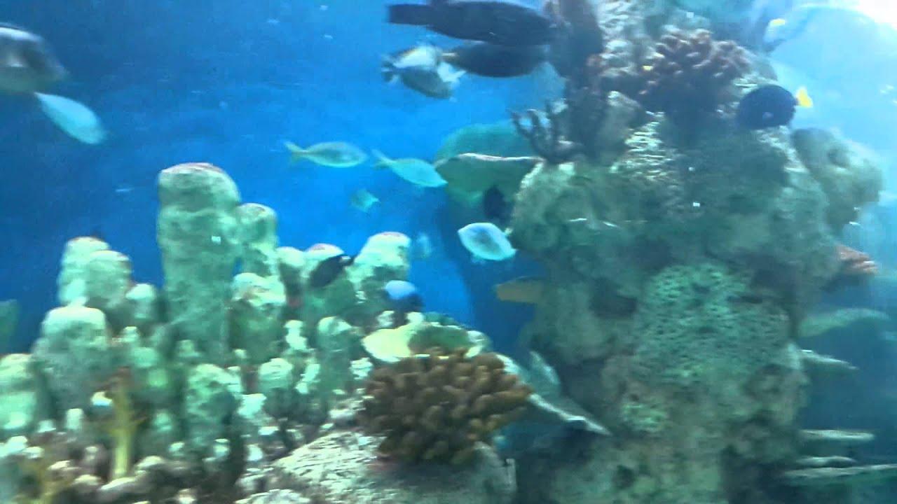 Fish aquarium in jeddah - Jeddah Fakieh Aquarium
