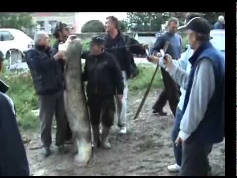 SOM 55 kg - Umka 2010