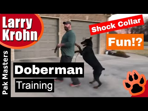 HOW TO TRAIN an Anxious Doberman with E-Collar (Remote Collar/Shock Collar)