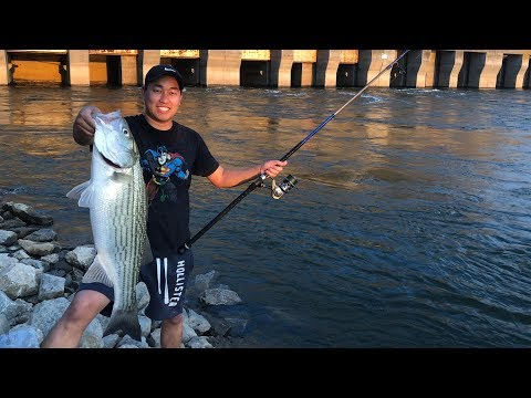Striper Fishing (Tennessee)