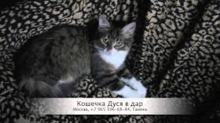 Котята в дар (Москва)