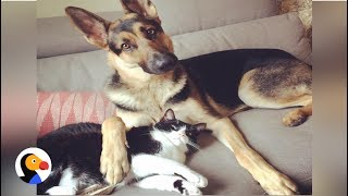 Dog, Cat Brothers Are Best Friends: Cat Loves Dog Since He Was a Puppy | The Dodo