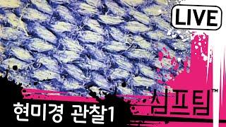 광학 현미경으로 관찰1 - 심프팀
