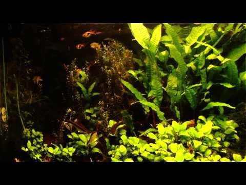 Aquarium - decorating our studio SoniQ
