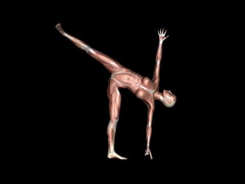 How to Half Moon Yoga Muscle Animation EasyFlexibility