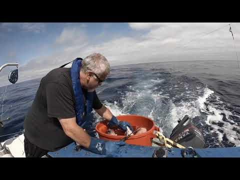 Albcore Tuna - Newport Oregon