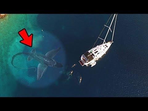 5 Mostri Marini Catturati a Video che hanno Attaccato una Barca