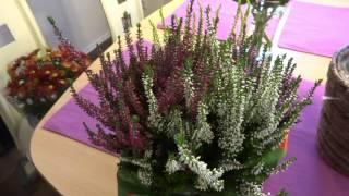 Осенние цветы Вереск Хризантемы - декоративные садовые растения