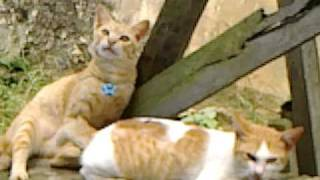 lucu kucing ketawa by ayudya.mp4