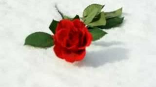 Darko Domijan - RUŽE U SNIJEGU