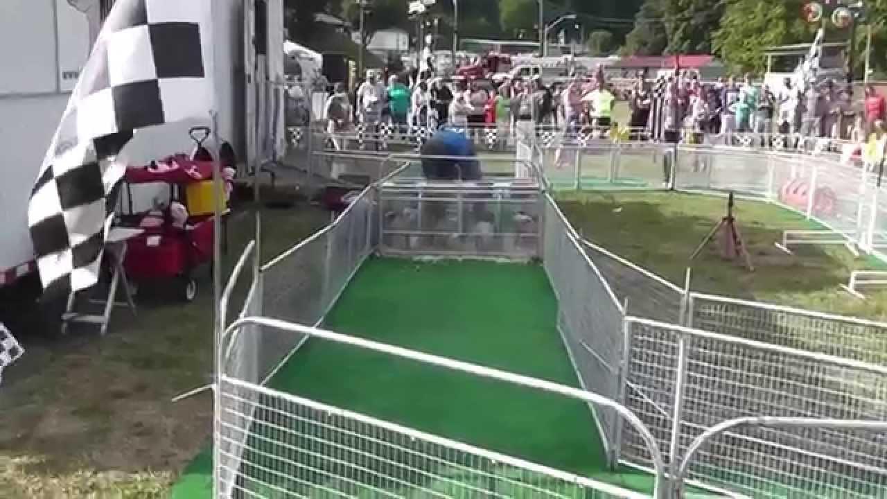 Hot Dog Pig Racing