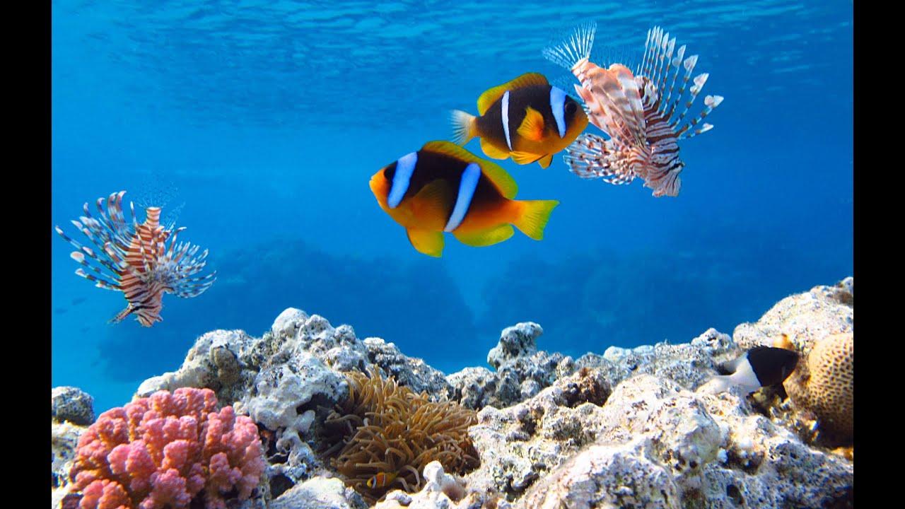 Подводный мир бухты Наама Бей, Египет, июнь 2015 - YouTube