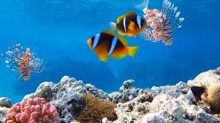 Подводный мир бухты Наама Бей, июнь 2015