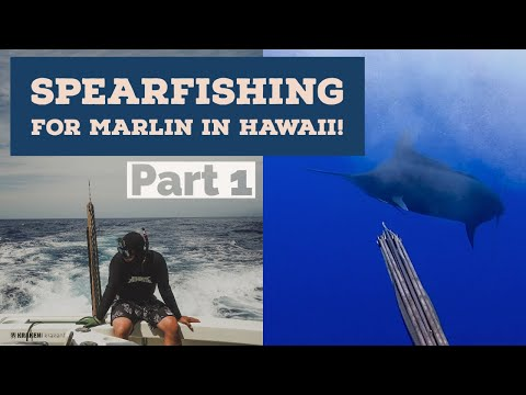 Wild Day Spearfishing For Pacific Blue Marlin Off Kona Part 1