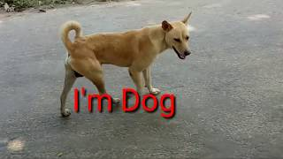 Dog videos for kids.#Indian Street Dogs fight videos before#Funny dog videos.