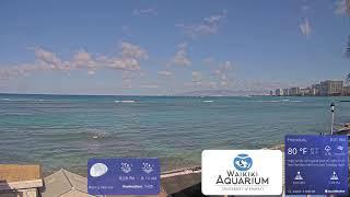 Preview of stream Waikiki Aquarium South Shore Surf Cam