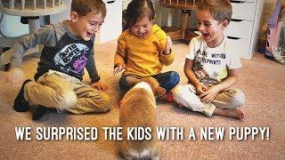 おうちに子犬がやってきた!ビックリ嬉しい子供たちの反応がプライスレス