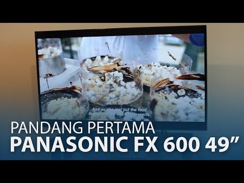 Panasonic 4K TV 43FX600H 49FX630H 49EX680H 49FX800H 吋開箱