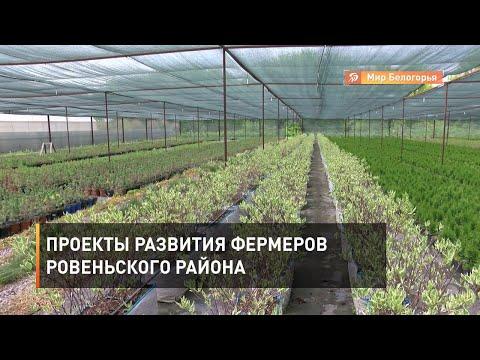 Выращивание орехов и декоративных растений в Ровеньском районе