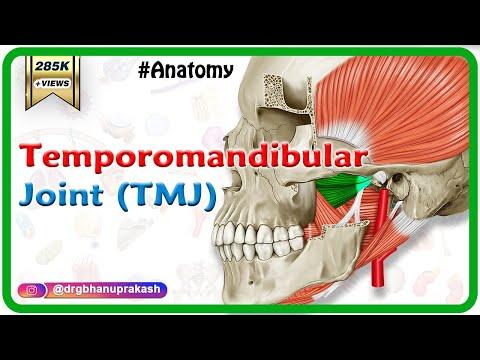 Anatomy Of Tmj Temporomandibular Joint Anatomy Medical