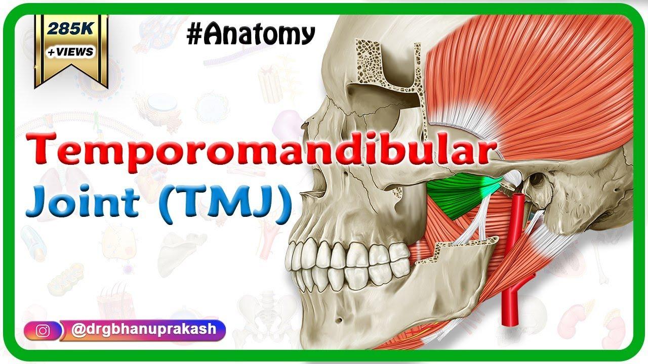Anatomy Of Temporomandibular Joint Tmj Head And Neck Gross