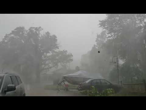 Tree Falls in Ann Arbor Storm