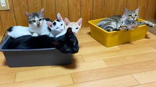 優しいお兄さん猫とごはんをくれる人間なら...【保護猫】