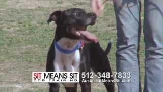 30 Sec Introduction To Sit Means Sit Dog Training Austin & San Antonio