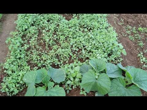Best Organic Farming or Gardening in Metro Cities