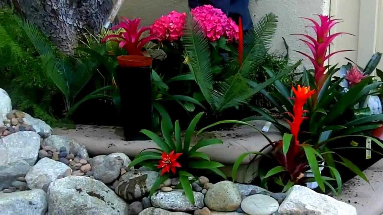 Plants Around Pool Landscaping