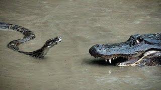 TOP 10 ANIMALES MÁS LETALES DE ASIA