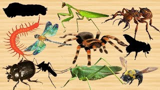 Learn Old MacDonald Insects Toys For Kids - Learn Insects Names With Wrong Wooden Slot for Children