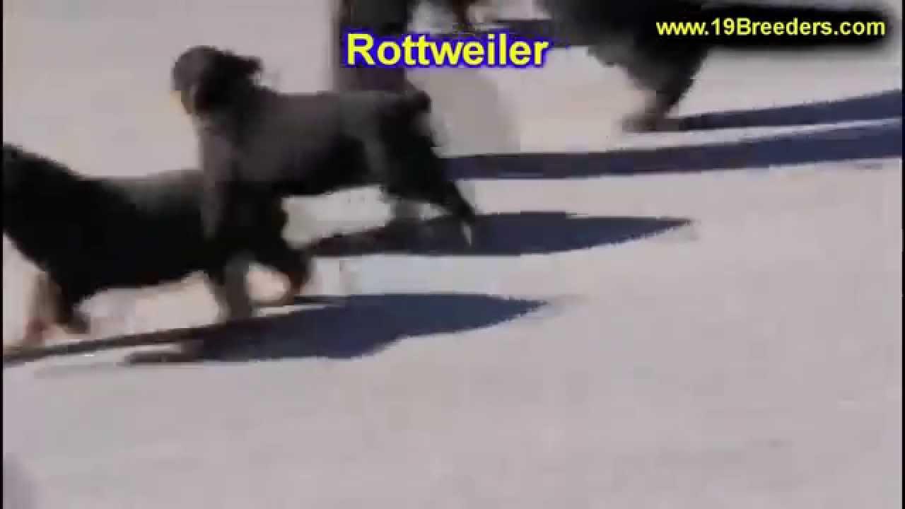 Craigslist Dothan Alabama >> Rottweiler, Puppies, Dogs, For Sale, In Birmingham, Alabama, AL, 19Breeders, Huntsville, Dothan ...