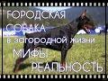 Городская собака в загородном доме: ожидания и реальность