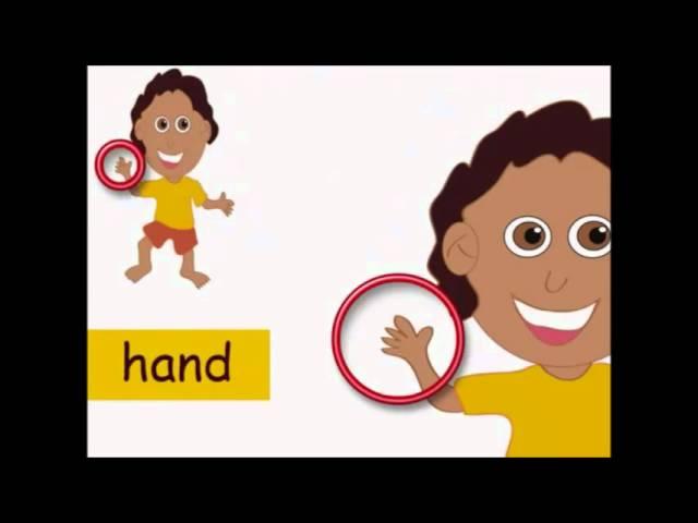 اجزاء جسم الانسان بالانجليزي مترجم Youtube