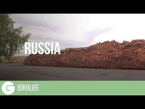 The Ugly Truth About Bioenergy | Russia
