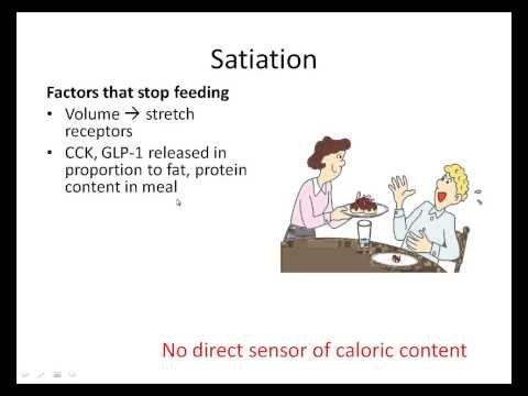 Regulation of Satiety and Satiation