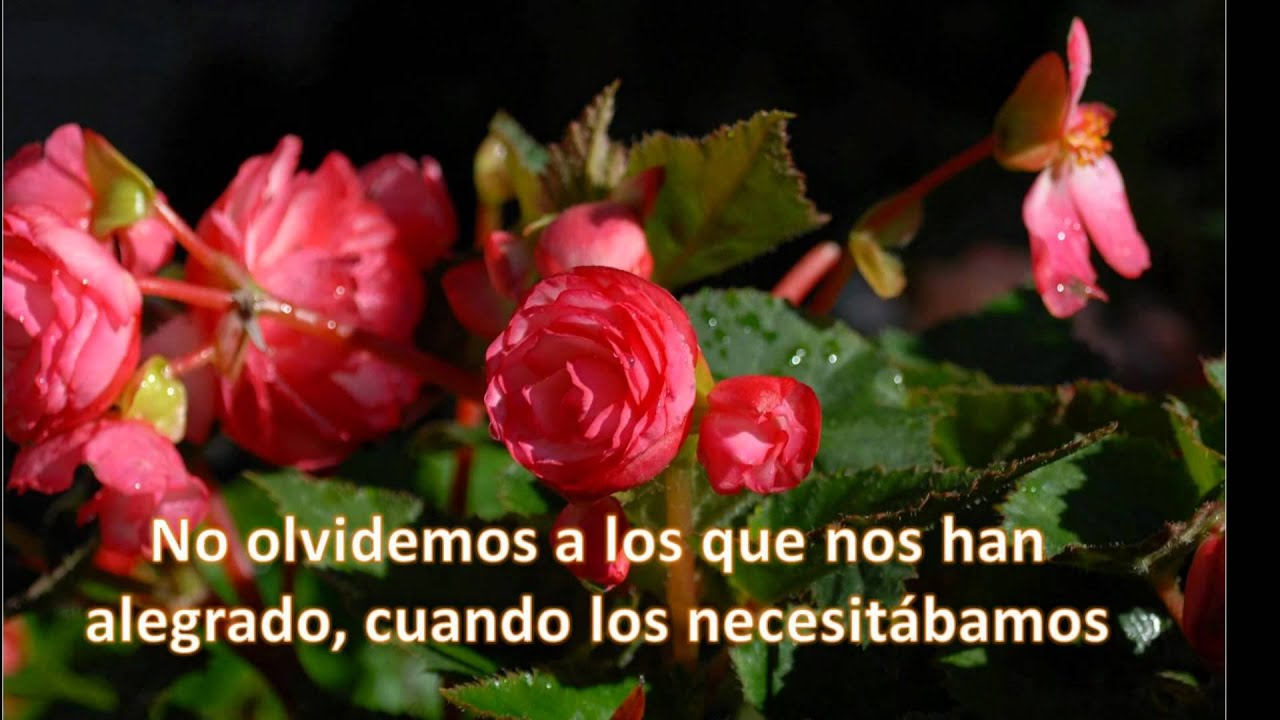 FRASES, FLORES, PAISAJES - YouTube