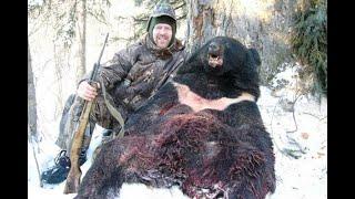 Жестокая Охота На Бурого Медведя с лайками в берлоге.Кровавая видео подборка!!!Cruel Bear Hunt