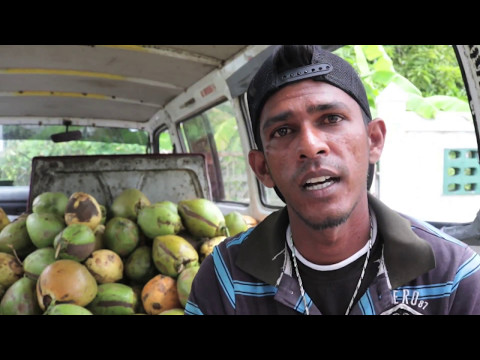 Young Entrepreneurs (Coconut Man)
