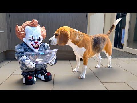 Funny Dogs vs Halloween Pranks Compilation