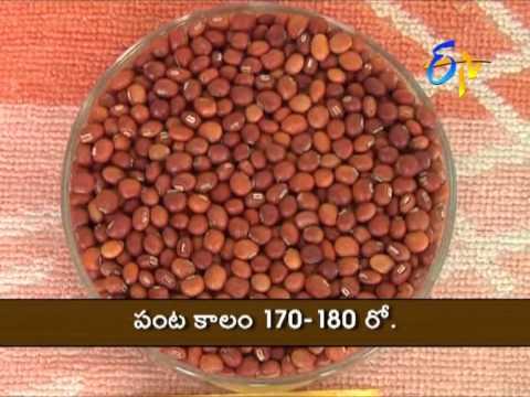 Red Gram Varieties for Telangana & A.P.