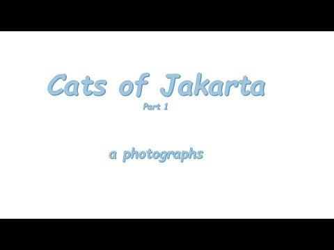 Cats of Jakarta Photographs Part 1