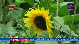 Siyatha TV News 09.30 PM - 23-04-2018 Thumbnail